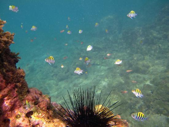Laluna Hotel: Snorkeling