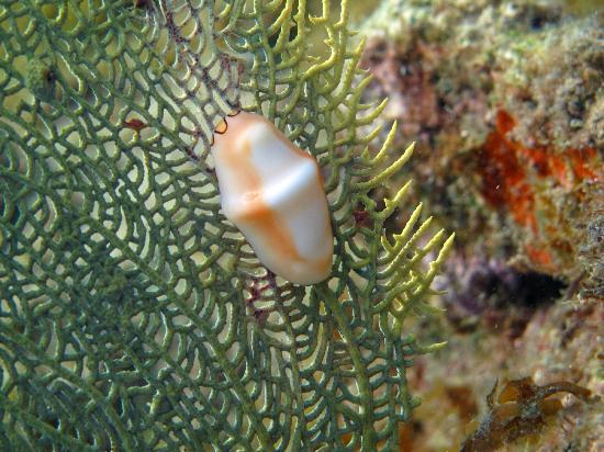 لالونا هوتل: Snorkeling