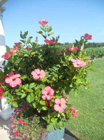 Turdo Vineyards & Winery: More gorgeous flowers