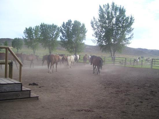Ranch at Ucross: Horses