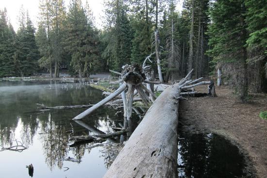 Manzanita Lake Camping Cabins: evening view of fallen trees on the lake - 1 minute walk from our cabin