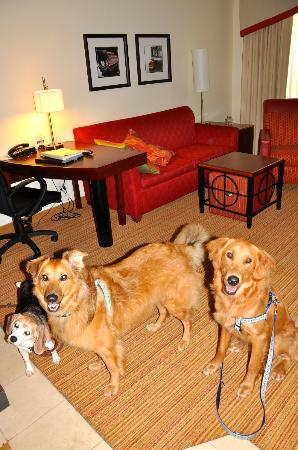 Residence Inn Burlington Colchester: Dutch, Josie and Alice in our Suite