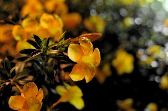 Neel Nirjaney: garden