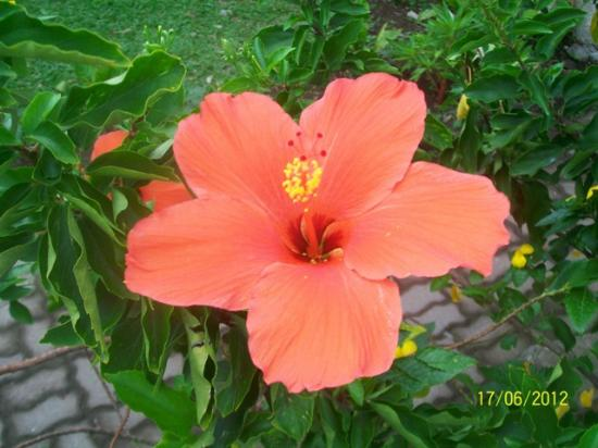 Paras Beach Resort: Resort Garden Flower