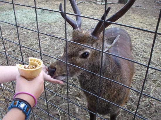 GarLyn Zoological Park: feeding