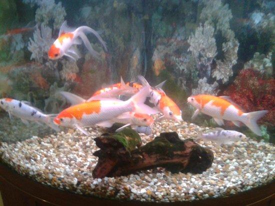 New Loon Fung : Restaurant Aquarium.