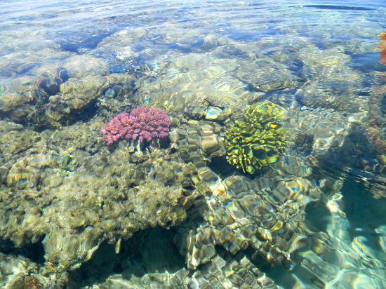 The Oberoi Sahl Hasheesh: Coral Reef