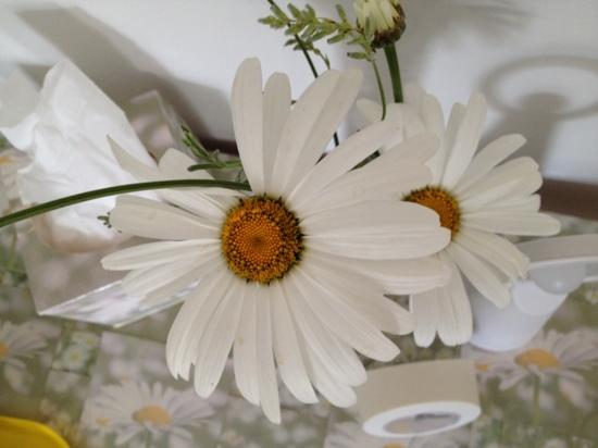 Angels of Awakening at the Daisy Centre: daisy retreat - fresh flowers in the room