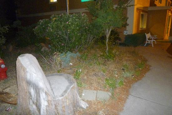 Quality Inn & Suites : No grounds upkeep