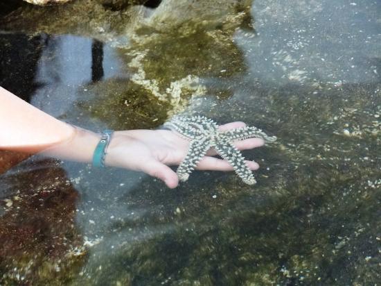 Aquarium de Biarritz: Bassin Tactile