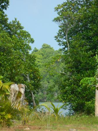Mangrove Villa: The lovely greenery and view of Bentota river