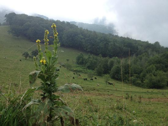 The Cataloochee Ranch: view from a hike