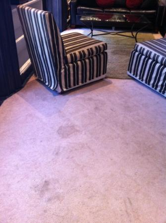 Back Bay Beacon: 2R- a Dump. Rug is stained and dirty throughout whole unit.
