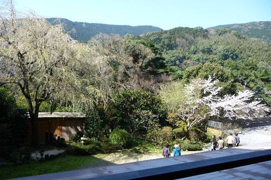 Utayu no Yado Atami Shiki Hotel : 桜がキレイでした