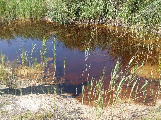Fletcher Badhotel Callantsoog: Mooi meertje in de duinen