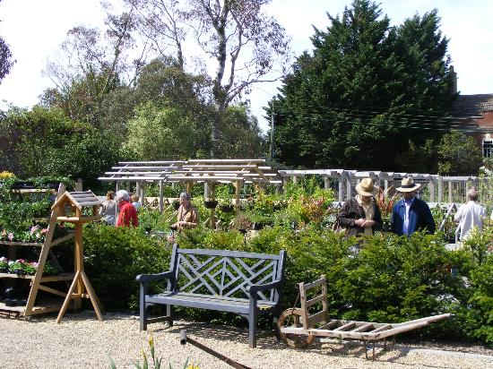 Walled Gardens of Cannington: Plant sales area