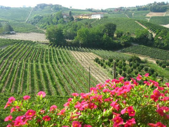 Agriturismo Cascina Sciulun: Il panorama che si ammira dalla terrazza della camera da letto
