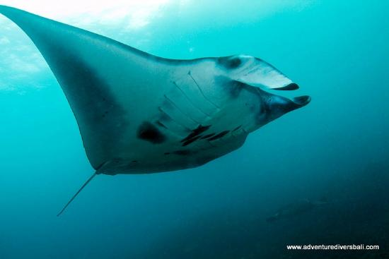 Amed, Indonesia: Manta Point
