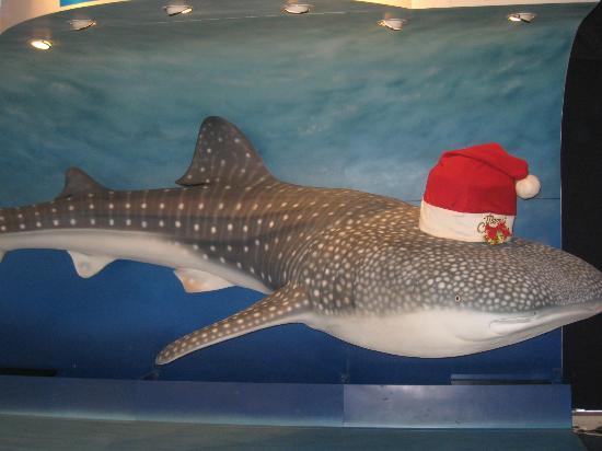 Whale Shark replica! - Picture of Osaka Aquarium Kaiyukan ...