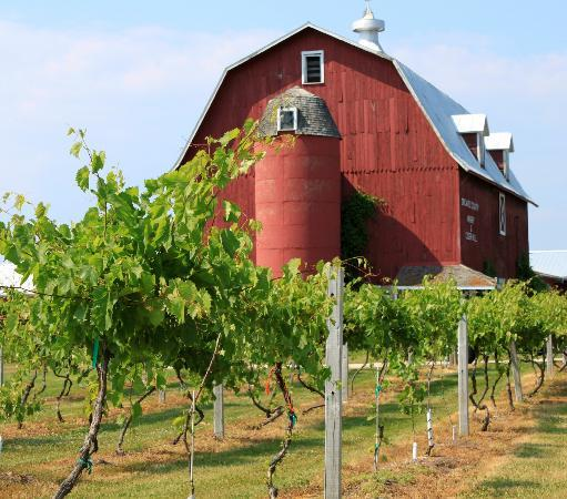 Lautenbach's Orchard Country: Barn with a vineyard.