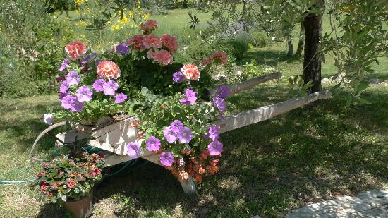 Il Casale Del Madonnino: Beautiful flowers in the garden