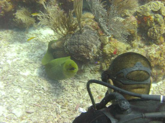 Black Durgon Dives