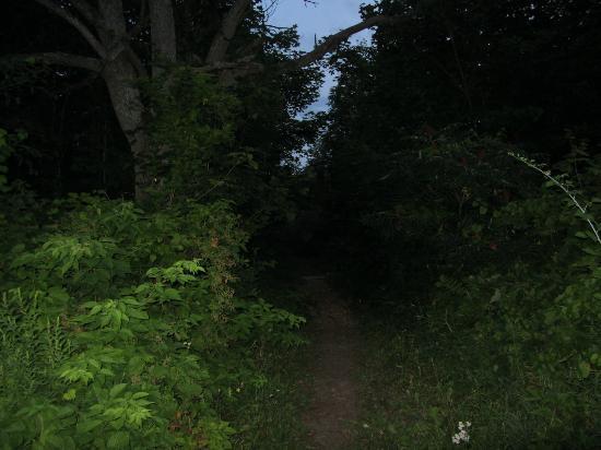 Sugar Ridge Retreat Centre: walk to cabin