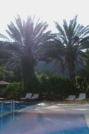 Aida Hotel: Pool