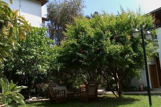 Aida Hotel: Shaded garden area