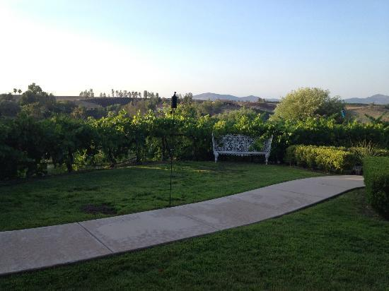 Inn at Churon Winery: from our patio