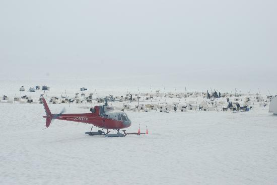 Alaska Icefield Expeditions: Helicopter by the dog camp