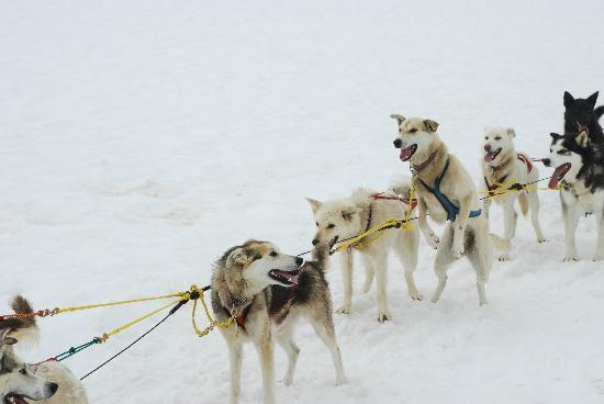 Alaska Icefield Expeditions: Dogs raring to go