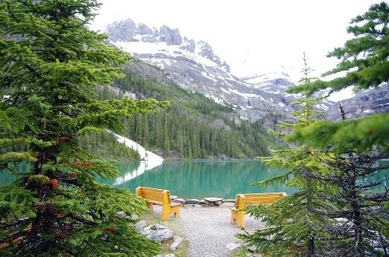 Lake O'Hara Hiking - ALPINE HOLIDAYS: Even on a misty cool day its a lovely hike
