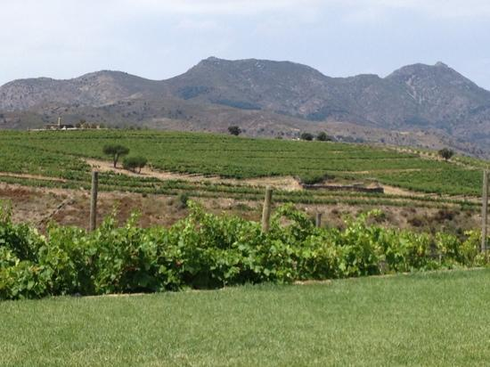 Sa Perafita : view to the wineyard