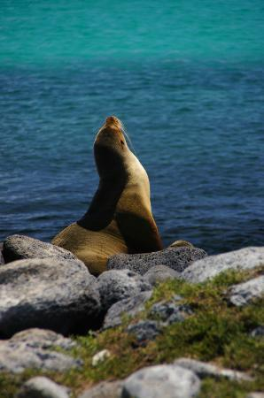 Galapagos Alternative: Sea Lion at La Loberia on San Cristobal