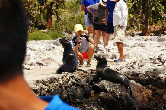 Galapagos Alternative: A park visitor NOT observing the two meter rule