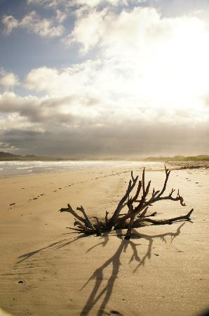 Galapagos Alternative: Beach near Puerto Villamil on Isabela Island