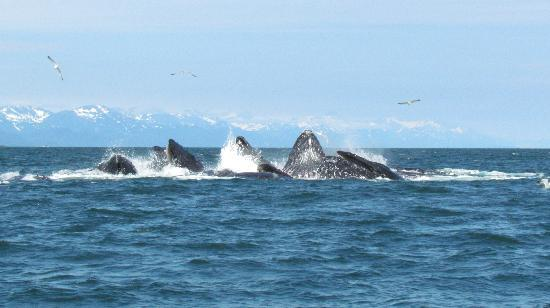 Harv and Marv's Outback Alaska: Wonderful Whale Watching!