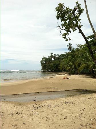 Hidden Jungle Beach House: Beach in downtown Puerto Viejo