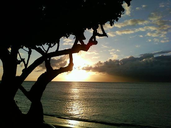 The Napili Bay: Rare Milo tree just below our lanai.