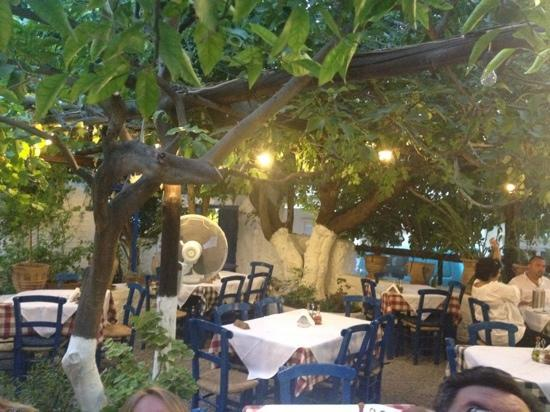 Avli Taverna: the yard