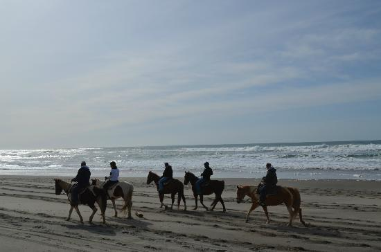 Green Acres Beach & Trail Rides: beach