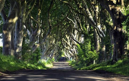 Brown's Country House Bed and Breakfast: The Dark Hedges lane - just trees....