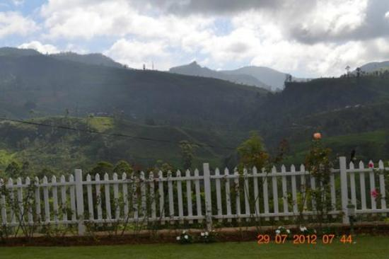 Amaya Langdale: view of expanse of the tea estate from room