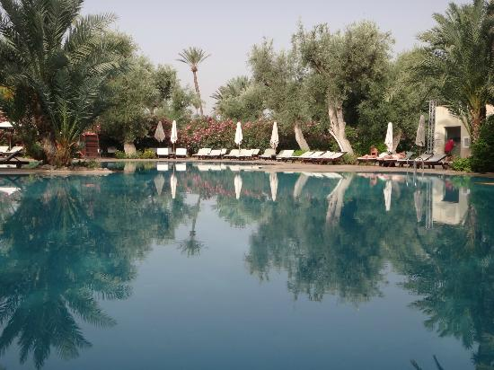 Club Med Marrakech La Palmeraie: Pool- the view from our favorite (almost private) place