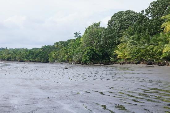 Hooked On Panama Fishing Lodge : spiaggia
