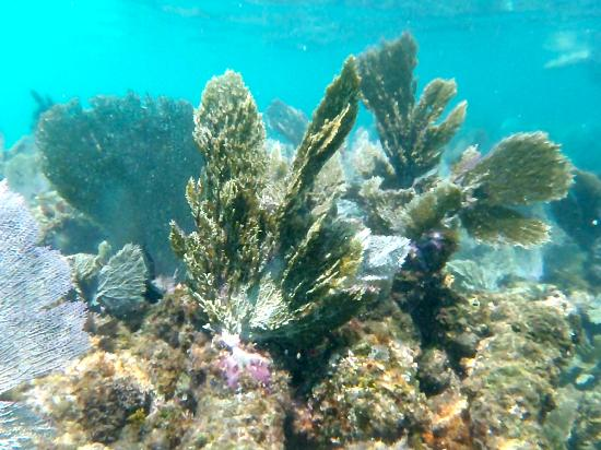 Puerto Aventuras, Messico: Beautiful coral!