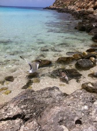 Spiaggia dei Conigli: gabbiani