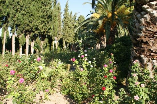 Argentikon Luxury Suites: Κήπος