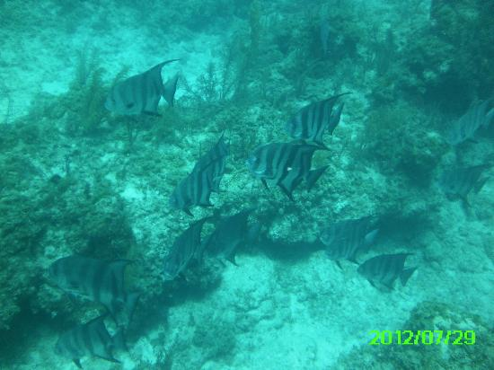 Stuart Cove's Dive Bahamas: Angel Fish